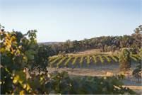 Glenlofty Wines James Hall